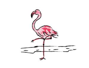 illustration flamingo pink drawing