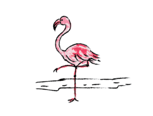 illustration flamingo pink drawing