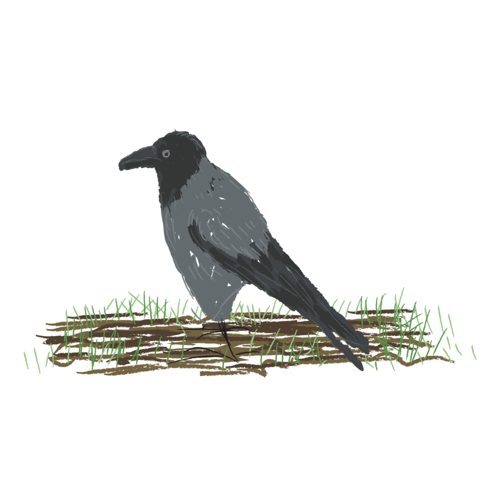 illustration doodle crow bird